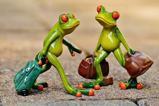 frogs-897387__340