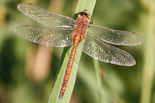 dragonfly-2449289__340