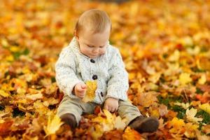 autumn-165184_960_720