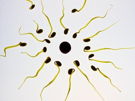 sperm-956481__340