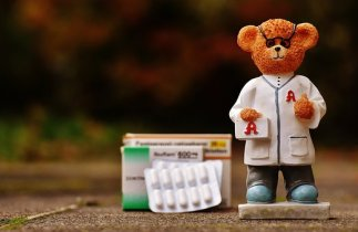 bear-1821456__340