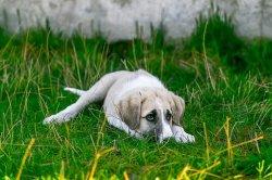 dog-2723082__340