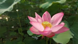 flowers-2007473__340.jpg