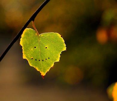 leaf-3077970__340
