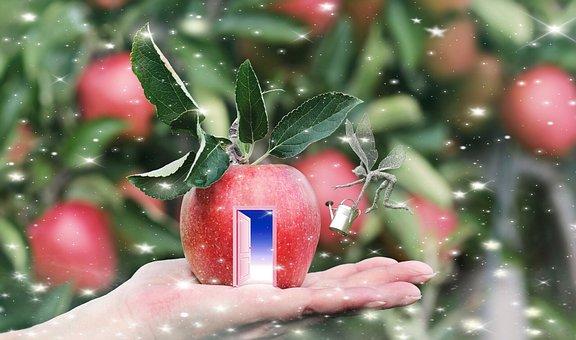 fruit-3268317__340