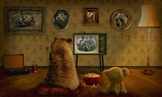 bear-3145874__340