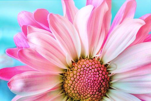 flower-3140492__340