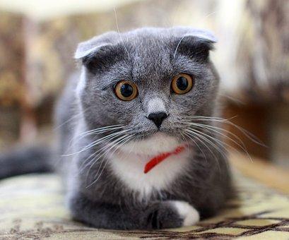 cat-2762156__340