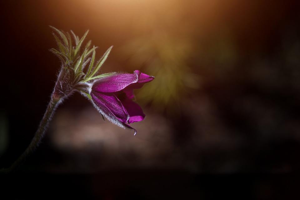 flower-2447167_960_720