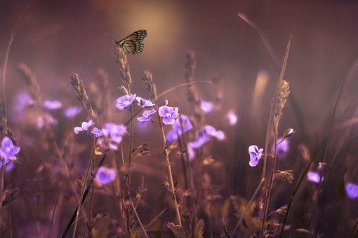 flowers-402094__340
