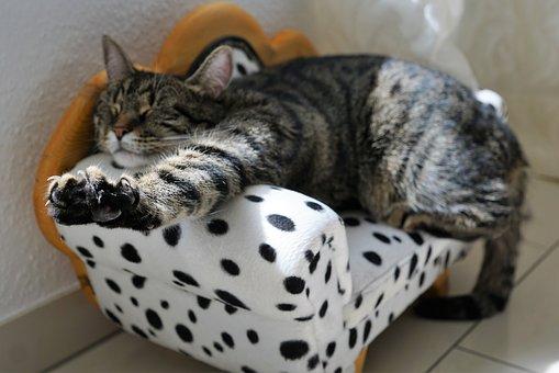 cat-2360863__340